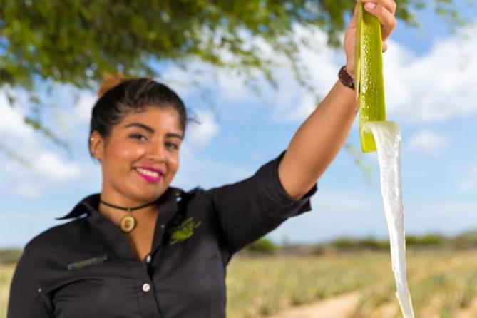 Aruba Island Tour - Aruba Aloe Factory