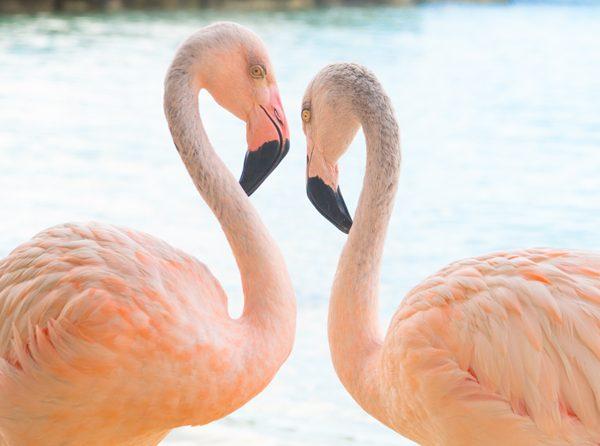 Half Day UTV Off Road Adventure with Snorkel and Flamingo Encounter 4