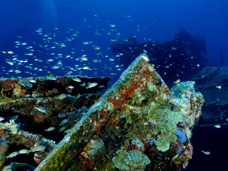 7. Antilla Shipwreck